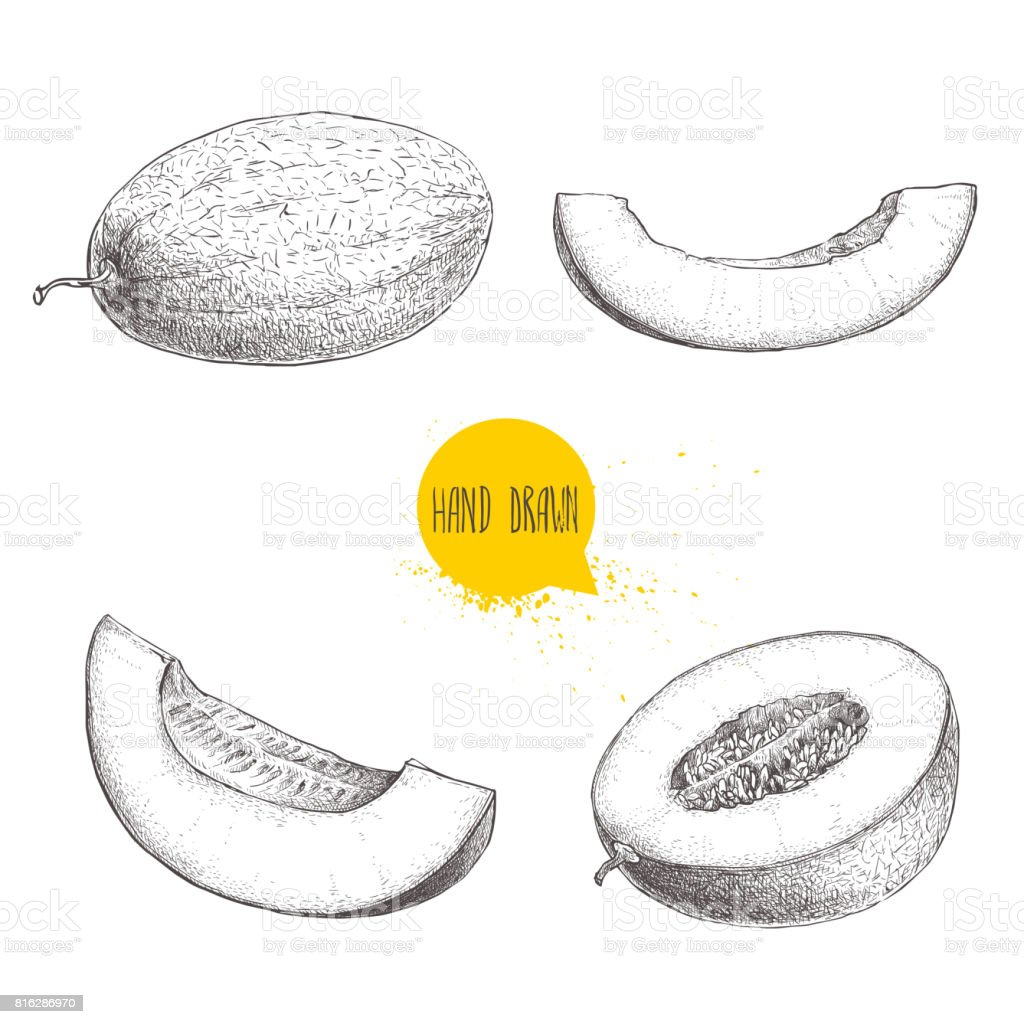 Hand drawn sketch style illustration set of ripe melons and melon slices. Organic food vector illustrations isolated on white background. vector art illustration
