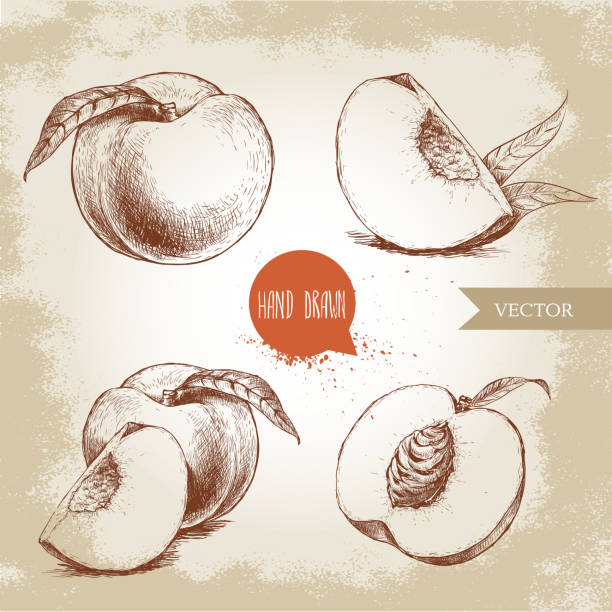 hand drawn sketch style peach fruit set - peach stock-grafiken, -clipart, -cartoons und -symbole