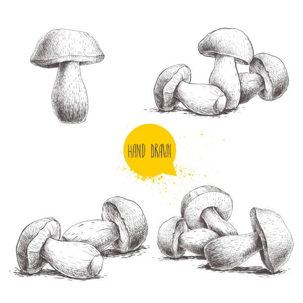 Hand Drawn Organic Food Label Set: Porcini Mushroom Illustrations, Royalty-Free Vector