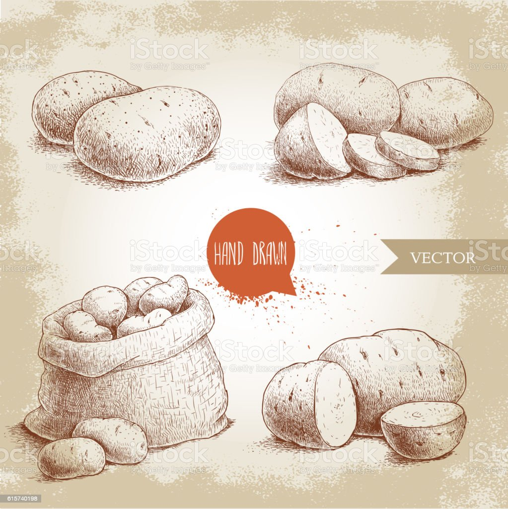 Hand drawn sketch style set illustration of ripe potatoes. vector art illustration