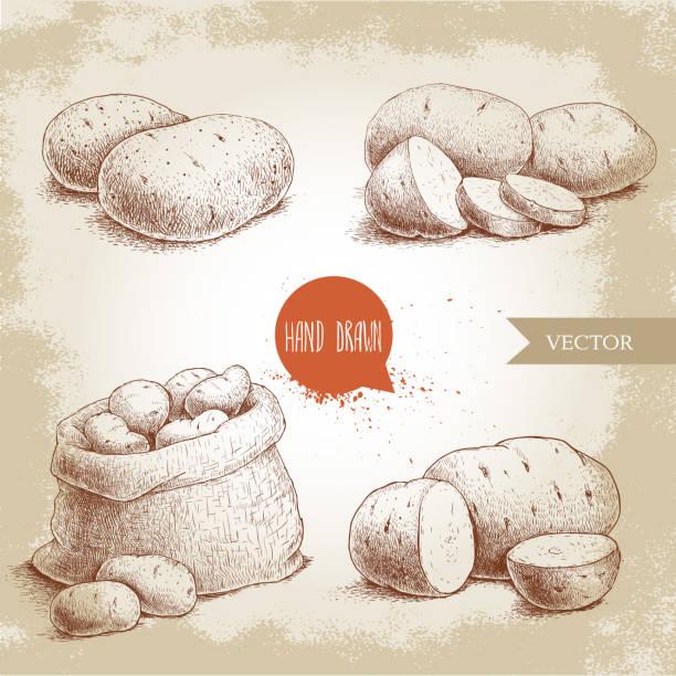 hand drawn sketch style set illustration of ripe potatoes. - kartoffeln stock-grafiken, -clipart, -cartoons und -symbole