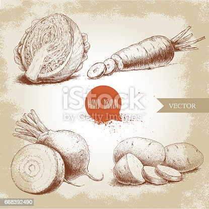 istock Hand drawn sketch style vegetables set. Half of cabbage, beet root, potatoes and sliced carrot. 668392490