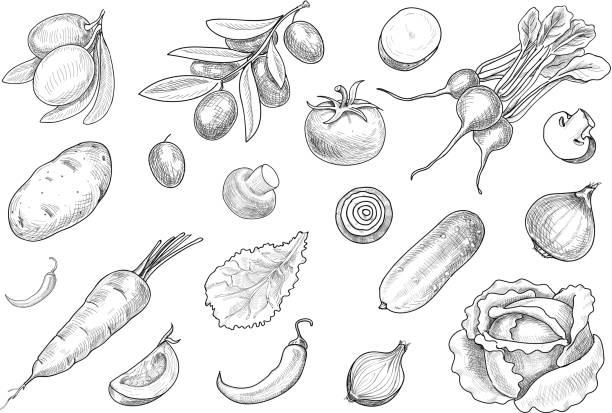ilustrações de stock, clip art, desenhos animados e ícones de hand drawn sketch various vegetables set vector. - tomate