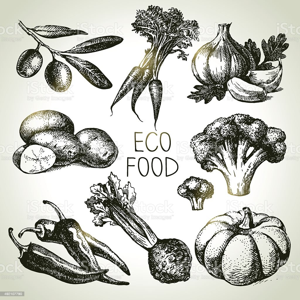 Dessinés à la main esquisse ensemble de légumes. Aliments Eco. Illustration vectorielle - Illustration vectorielle