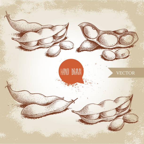 手描きのスケッチは、枝豆のグリーンをセットします。大豆のアートワークの組成コレクション古い背景に分離されました。民族と日本の健康食品。ベクトルの図。 - 枝豆点のイラスト素材/クリップアート素材/マンガ素材/アイコン素材
