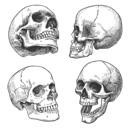 Hand drawn skull. Sketch anatomical skulls in different angles, gothic tattoo. Human skeleton dead head halloween engraving vector set
