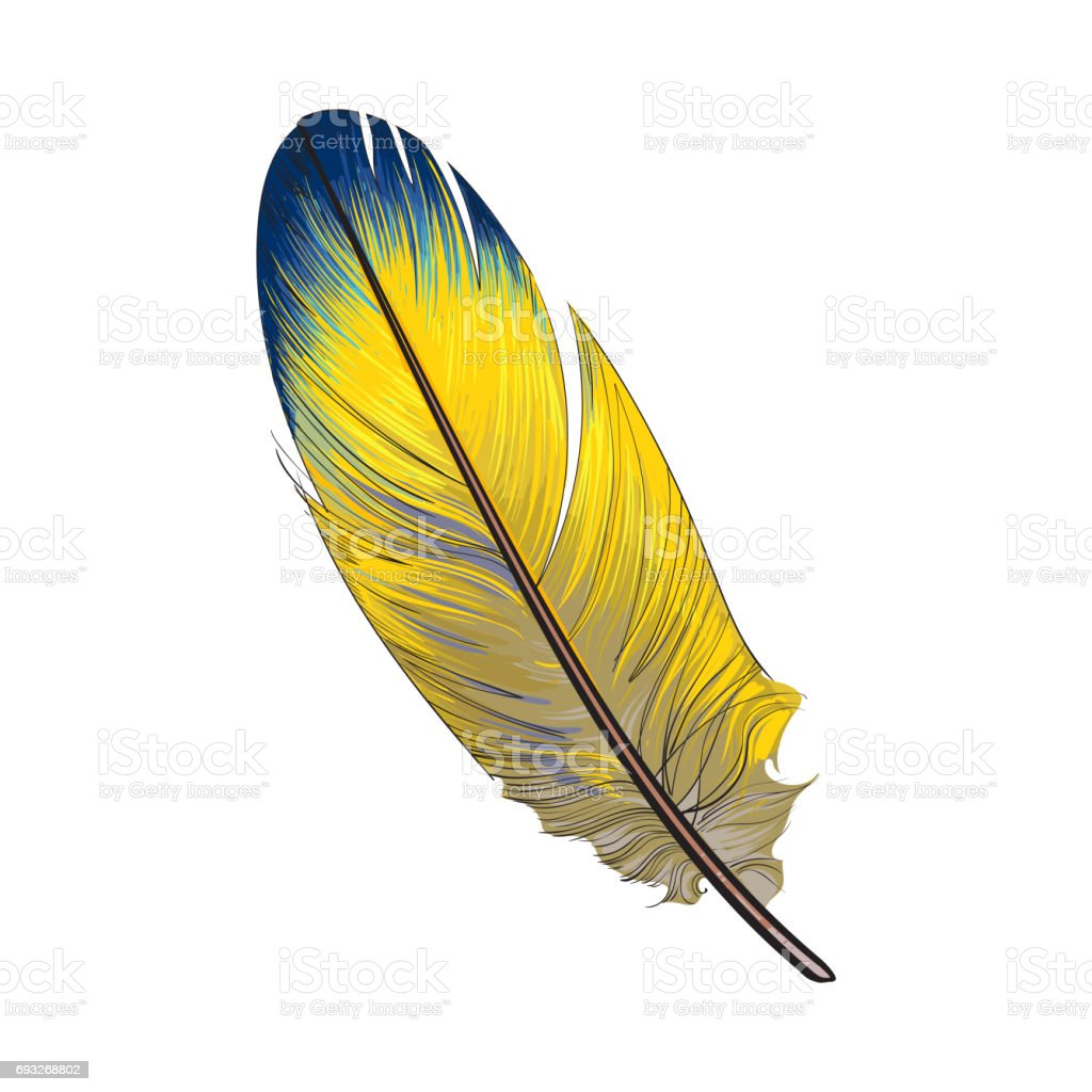 Hand Drawn Smoth Yellow And Blur Tropical Exotic Bird ...