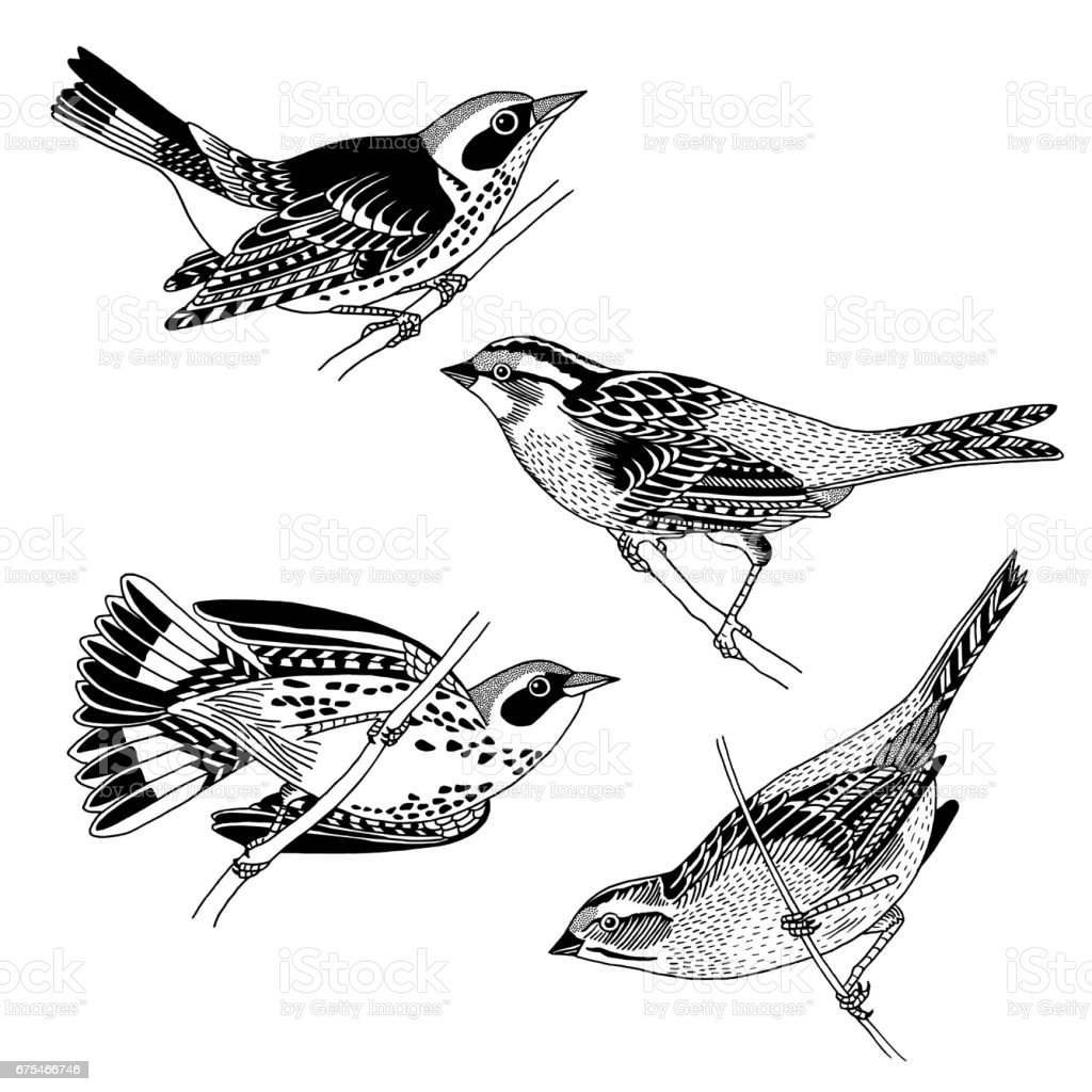Hand drawn sparrows and warblers vector art illustration