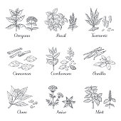 Hand drawn spices. Herbs and vegetables sketch elements, oregano turmeric cardamom basil and mint. Vector dried roots Indian food spices
