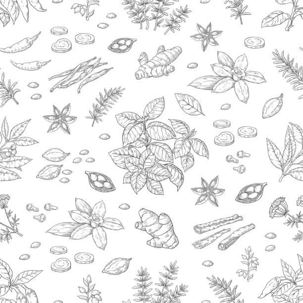 손으로 그린 향신료 패턴입니다. 허브와 야채 원활한 배경, 아시아와 인도 요리 스케치 요소입니다. 벡터 음식 포스터 - 바닐라 양념류 stock illustrations