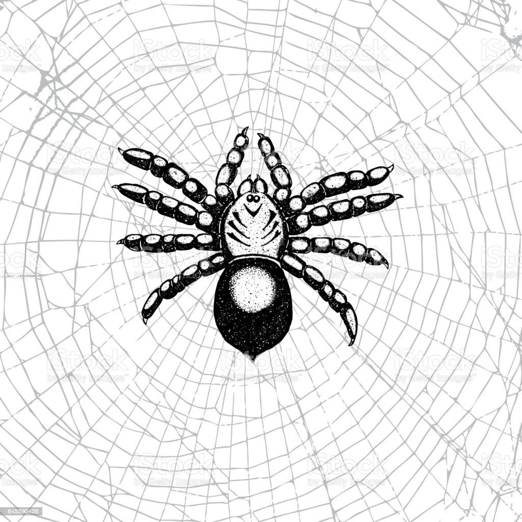 Araña Dibujada De Mano En La Web Insecto De Realista Punteado ...