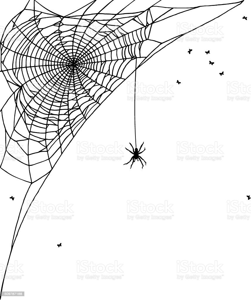 Hand drawn spiderweb vector art illustration