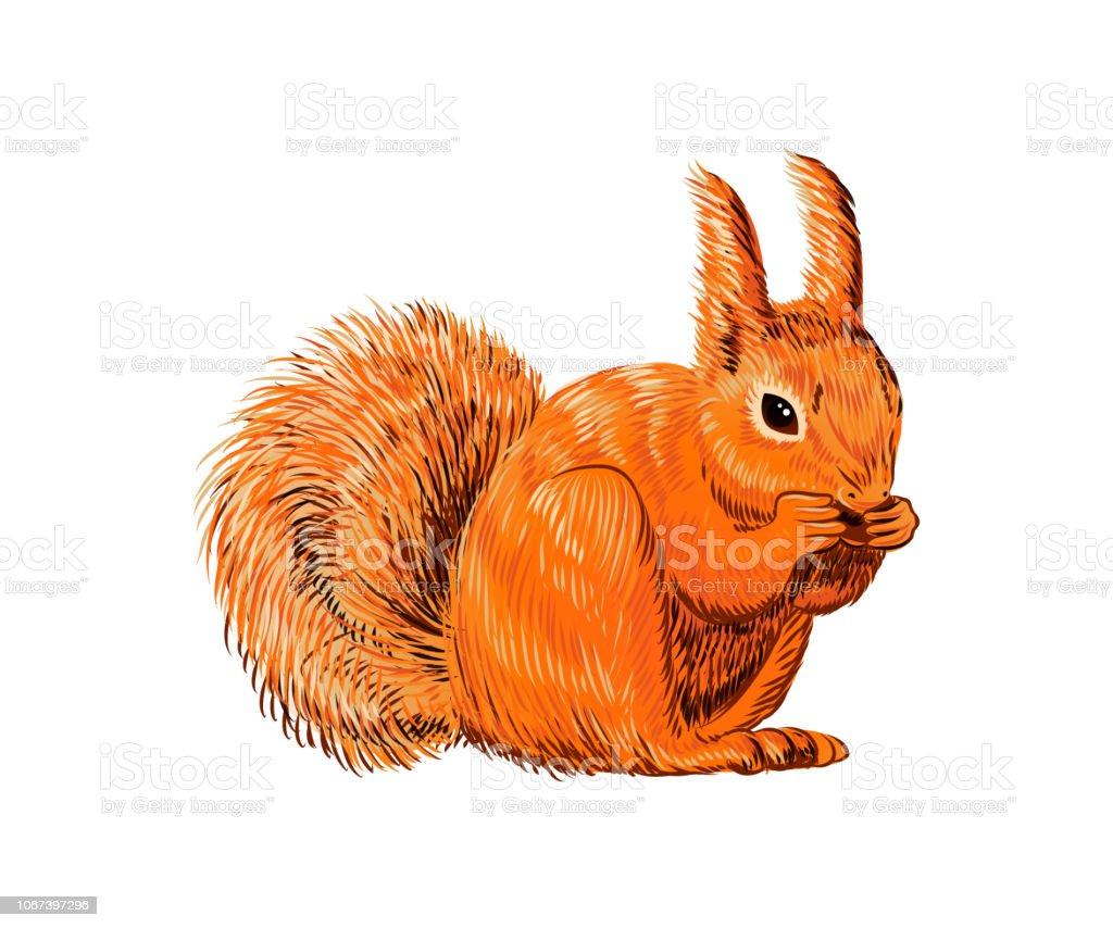 Ilustración De Ardilla Dibujada Mano Comiendo Tuerca Animales
