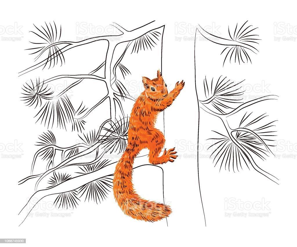 eichhörnchen zeichnen süß