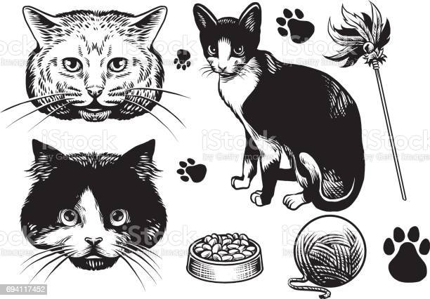 Hand drawn style cat collection vector id694117452?b=1&k=6&m=694117452&s=612x612&h=jfocpejnnd70qryqy5gtohvgfyxcvetonazjssqdf2y=