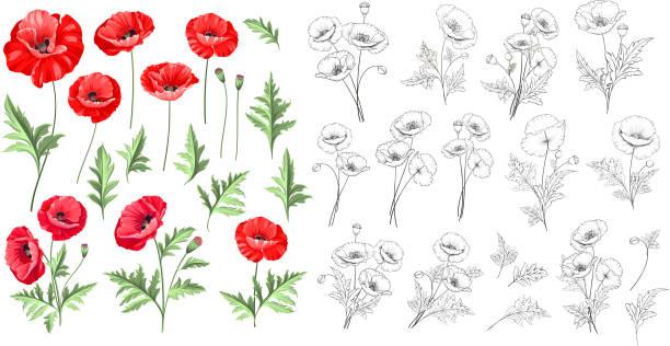 Tatouage De Coquelicot Rouge Vectoriels Et Illustrations Libres De Droits Istock
