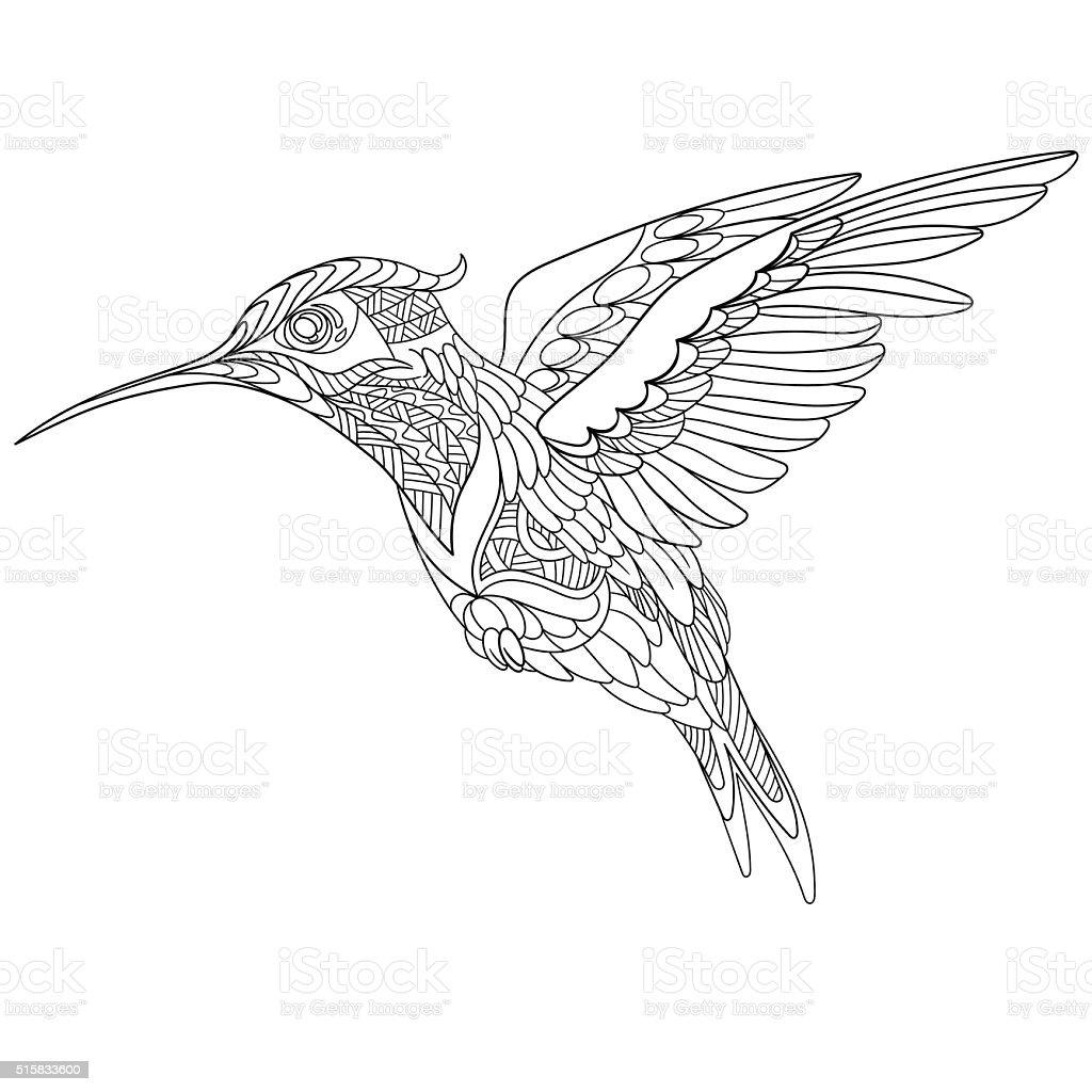 Handgezeichnet Stilisierte Kolibri Stock Vektor Art Und Mehr Bilder
