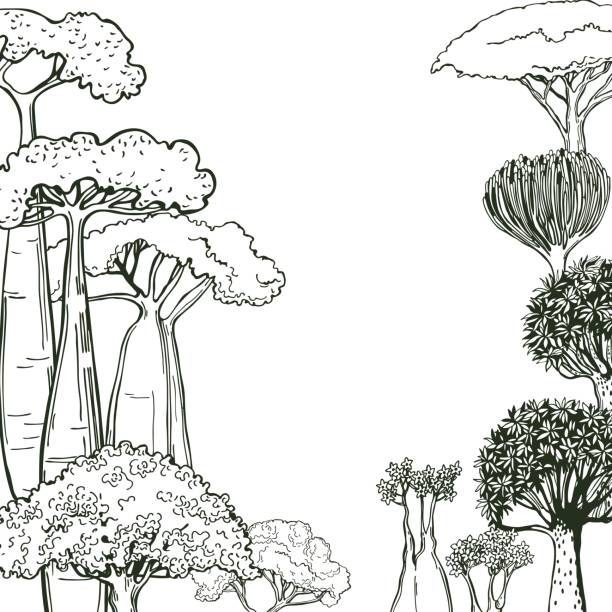 Hand drawn succulents  and trees of Africa. Hand drawn succulents  and trees of Africa. Vector background. Sketch illustration. south africa stock illustrations