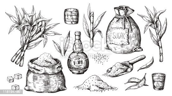istock Hand drawn sugarcane and rum. Vintage liquor bottle and glasses, sugar sack and cubes, sugar organic plants. Vector alcoholic beverage 1181947961