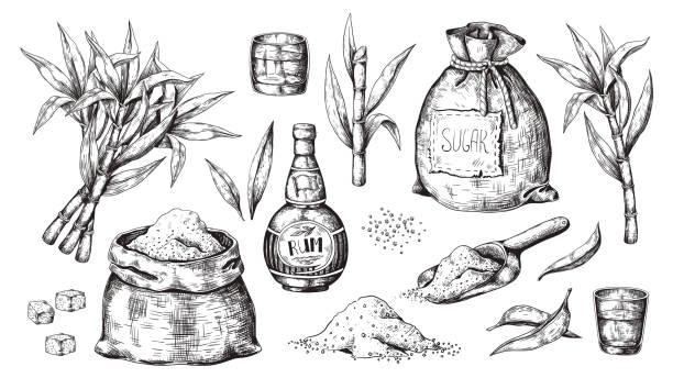 ilustrações de stock, clip art, desenhos animados e ícones de hand drawn sugarcane and rum. vintage liquor bottle and glasses, sugar sack and cubes, sugar organic plants. vector alcoholic beverage - açúcar