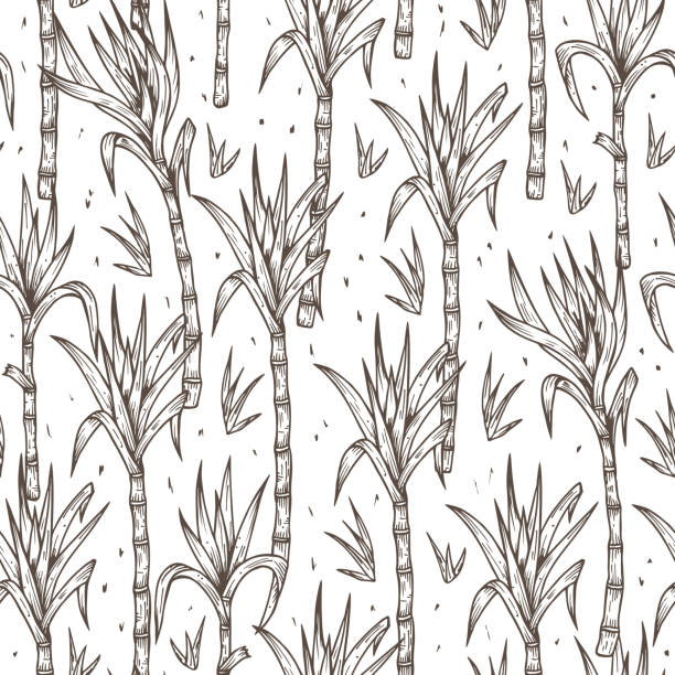 illustrazioni stock, clip art, cartoni animati e icone di tendenza di hand drawn sugarcane plants stalks with leaves seamless pattern - canna da zucchero