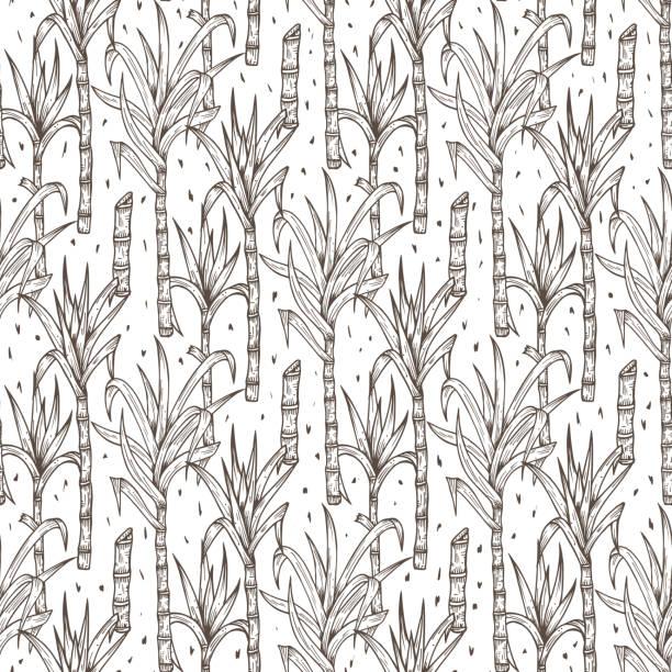 illustrazioni stock, clip art, cartoni animati e icone di tendenza di hand drawn sugarcane plants vector seamless pattern. sugar cane stalks with leaves endless background - illustrazioni di canna da zucchero
