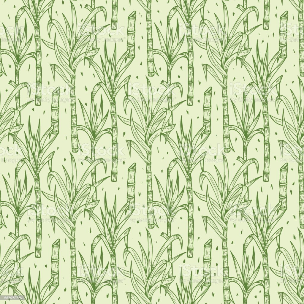 Hand Drawn Sugarcane Plants Vector Seamless Pattern. Sugar cane stalks with leaves endless background vector art illustration