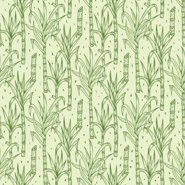 illustrazioni stock, clip art, cartoni animati e icone di tendenza di hand drawn sugarcane plants vector seamless pattern. sugar cane stalks with leaves endless background - canna da zucchero