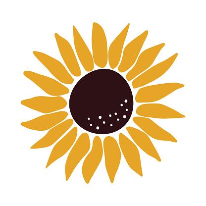 Hand drawn Sunflower vector illustration