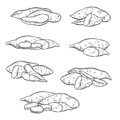 Hand drawn sweet potato. Vector sketch  illustration.