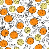 Hand drawn tangerines on white background. Vector seamless pattern
