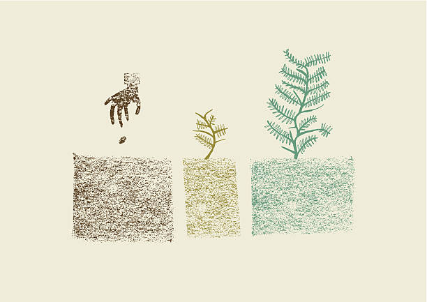 stockillustraties, clipart, cartoons en iconen met hand drawn tree growing process in three steps vector illustration - zaaien