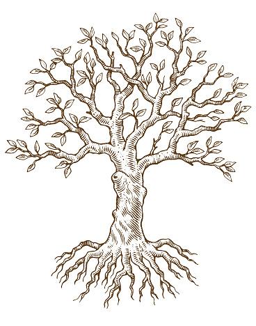 Hand drawn tree vector illustration