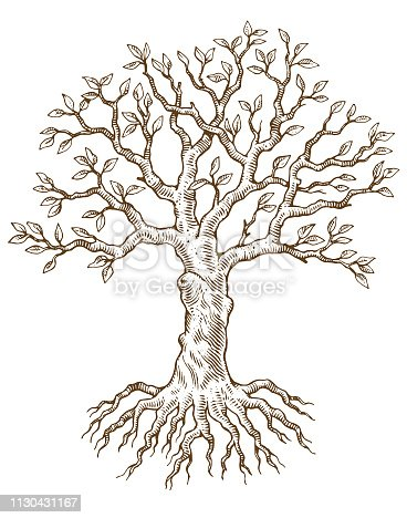 A hand drawn tree and roots
