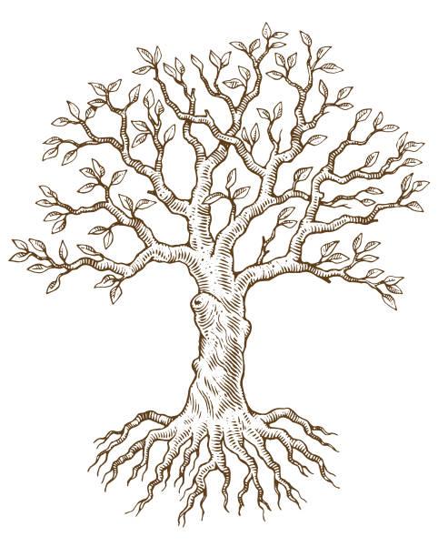 Hand drawn tree vector illustration vector art illustration