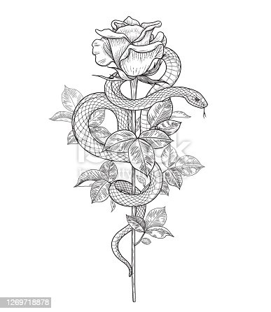 Hand drawn twisted Snake and rose bud