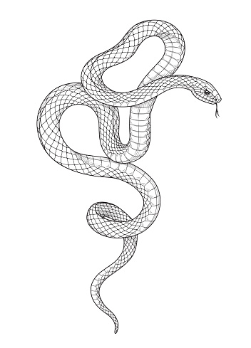 Hand drawn twisted snake isolated on blank background. Vector monochrome serpent side view. Black and white animalistic illustration in vintage style, t-shirt design, tattoo art, coloring page.