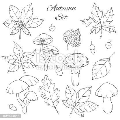 istock Conjunto de vector de stylizes hojas de árbol de esquema para ...