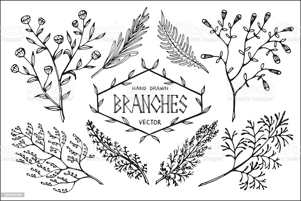Hand drawn vector branches. vector art illustration