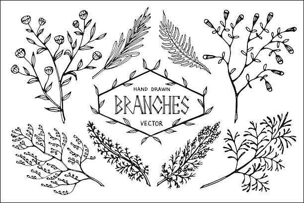 hand drawn vector branches. - twig stock illustrations, clip art, cartoons, & icons