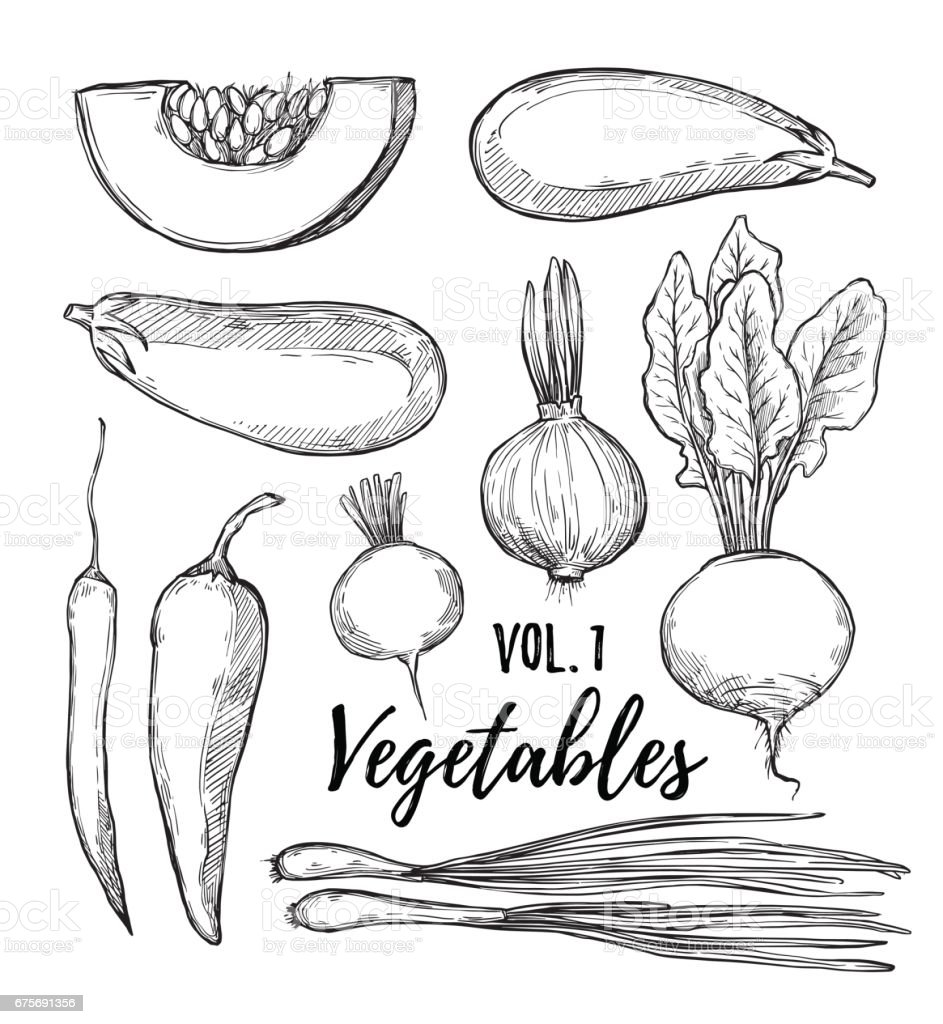 Hand drawn vector illustration - collection of vegetables vol.1(pumpkin, eggplant, onion, pepper, turnip, radish, chili pepper).Design elements in sketch style. vector art illustration