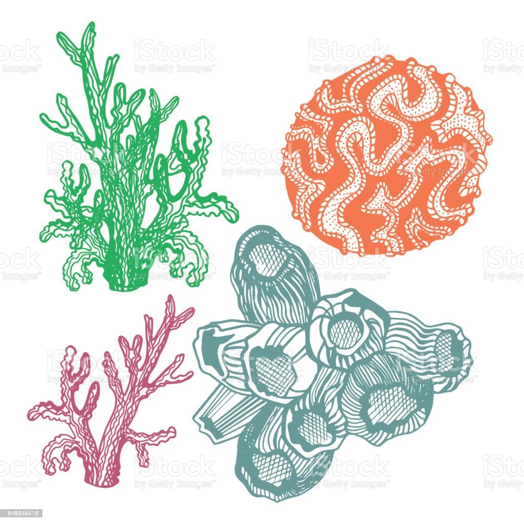 Hand drawn vector illustration. Coral set. Sketch vector art illustration