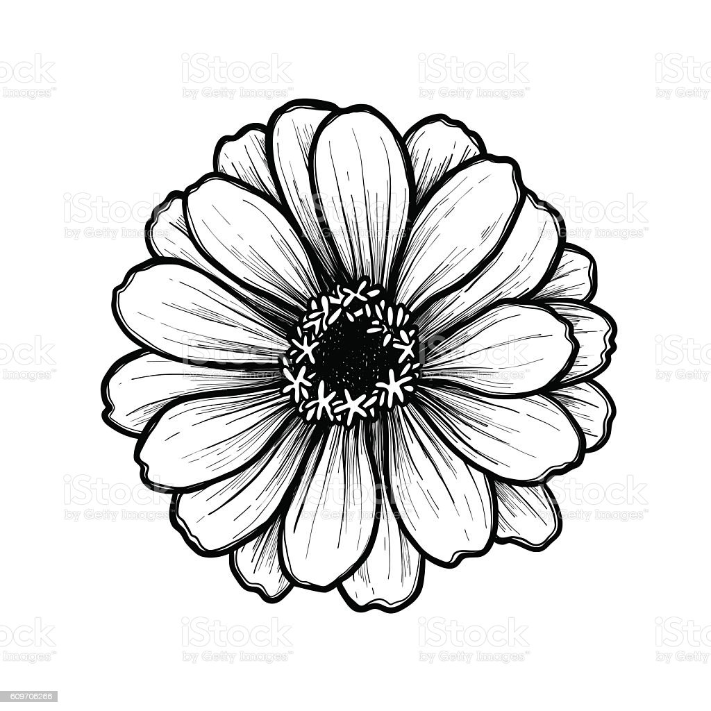 Zinnia Tattoo Designs
