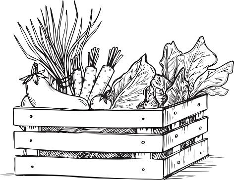 Hand drawn vector illustration -Fresh vegetables. Supermarket.