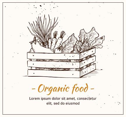 Hand drawn vector illustration - Fresh vegetables. Supermarket.