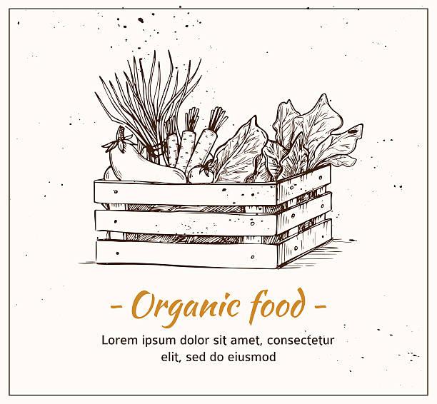 Hand drawn vector illustration - Fresh vegetables. Supermarket. Hand drawn vector illustration - Fresh vegetables. Supermarket. Grocery store. Organic and vegan food. farmers market illustrations stock illustrations