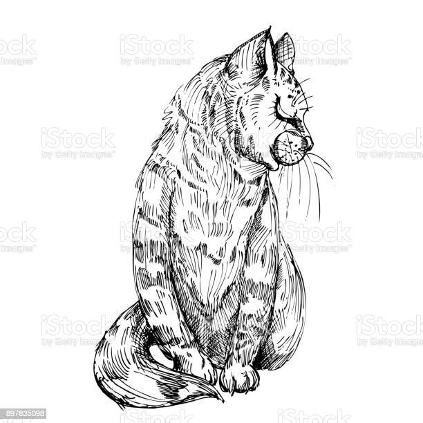 Hand drawn vector illustration of cat sketch vector eps 10 vector id897835098?b=1&k=6&m=897835098&s=612x612&h=3wocsb5fbybiax8tp7p cpj6tao2 tywynh7711p ye=