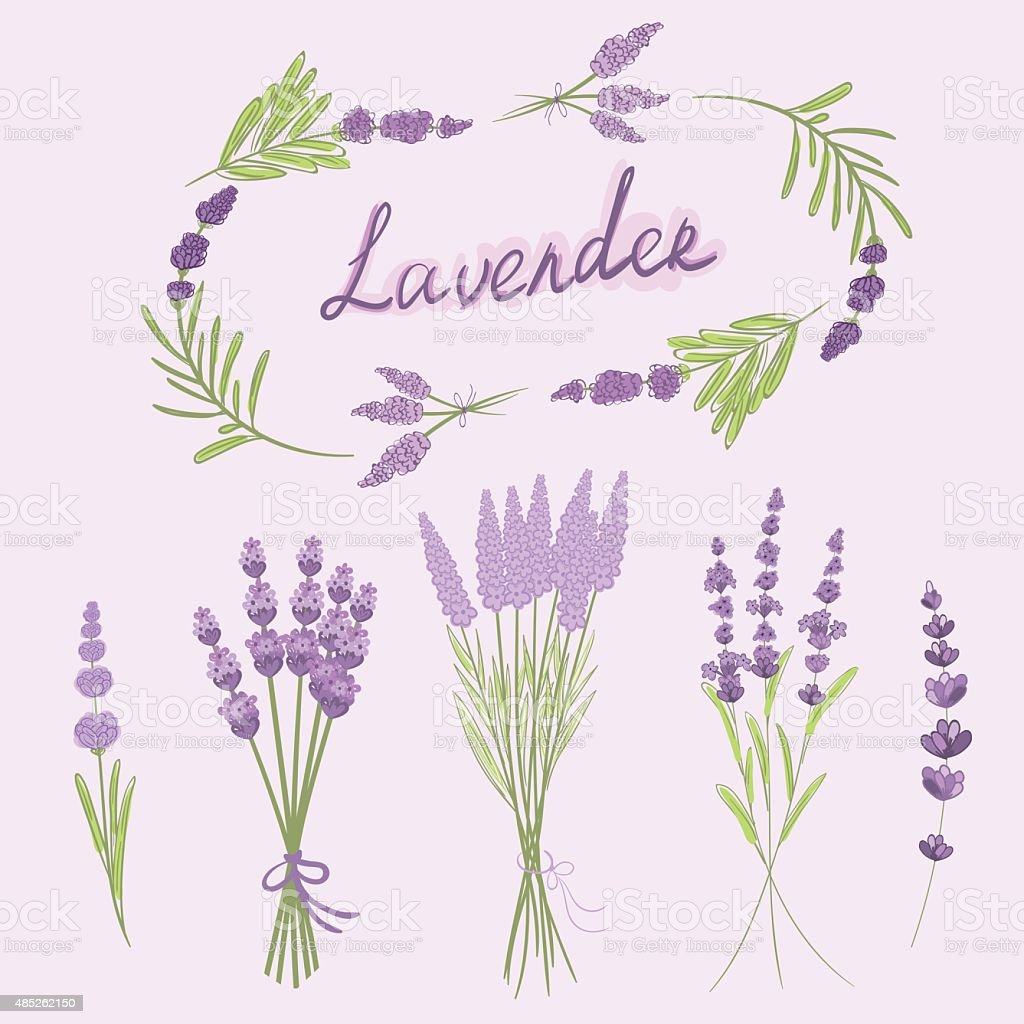hand drawn vector illustration of lavender stock vector