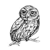Hand drawn vector illustration of owl. sketch. Vector eps 8