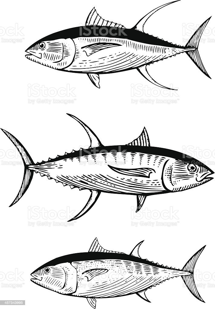 Hand drawn vector illustration of Tuna vector art illustration